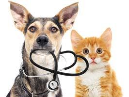 Cedar Fall, Waterloo best veterinarians in Cedar Valley