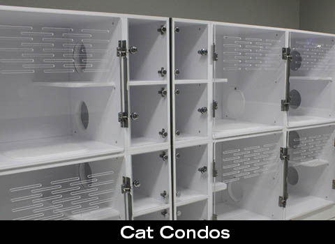 "Companion Animal Clinic offers an exclusive ""cat room"" for our feline friends"