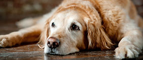End of Life Care - Companion Animal Clinic - Cedar Valley Veterinarians