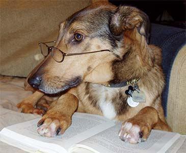 resources_smart dog.jpg