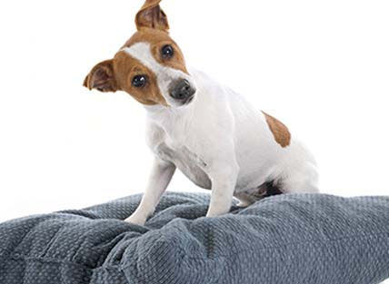 Whether you need a place for your pet for an overnight or long term arrangements, we will make your pet feel like family....because they are family at Companion Animal Clinic