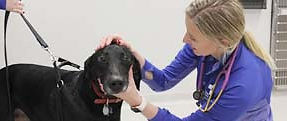 Companion Animal Clinic & Pet Resort provides all preventative care for your pet
