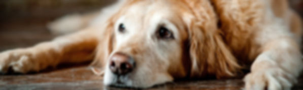 End of Life Care - Companion Animal Clinic - Cedar Valley Veterinarians If your pet is still having more good days than bad, we will work hard to recommend any treatments available so you can enjoy more days with your furry companion.