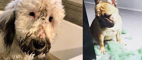 Pet Behavior Counseling - Companion Animal Clinic - Cedar Falls, Waterloo Veterinarians