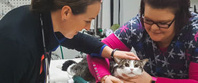 Pet Dentistry - Companion Animal Clinic - Cedar Falls, Waterloo Veterinarians