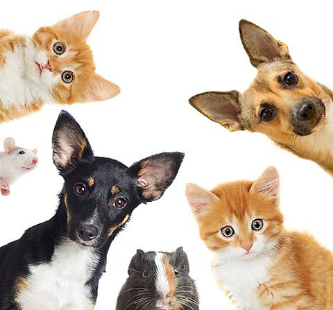 Companion Animal Clinic offers full pet care veterinary and prt care services under one roof
