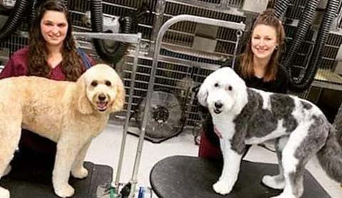 Grooming and Spa package available for your pet at Companion Animal Clinic