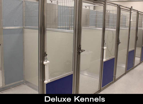 Deluxe kennels at Companion Animal Clinic. We offer kennels for all shapes and sizes of dogs and accomodation requests