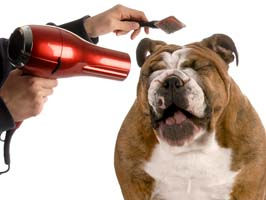 Cedar Fall, Waterloo best dog and cat groomer and Pet Spas