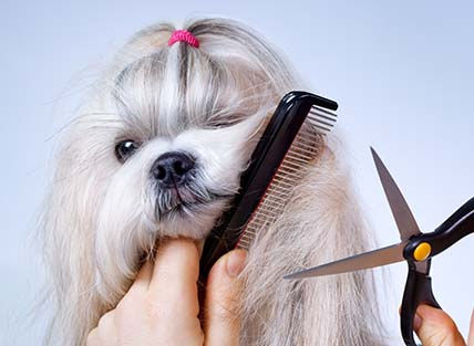Companion Animal Clinic offer full service pet grooming. Whether you pet just needs a bath, comb out or needs pampering with our spa service, we help your pet look, feel and smell their best