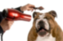 Best Groomers in the Cedar Valley. We groom dogs and cats and will have your pets looking and smelling fresh in no time.