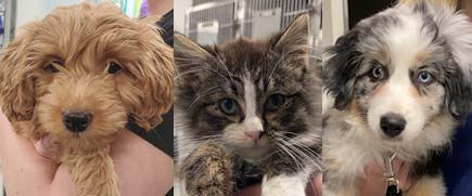 Your new pet's first wellness visit should be at 6-8 weeks old. Companion Animal Clinic is always excited to meet our new puppies and kitties