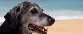 Senior Pet Care - Companion Animal Clinic