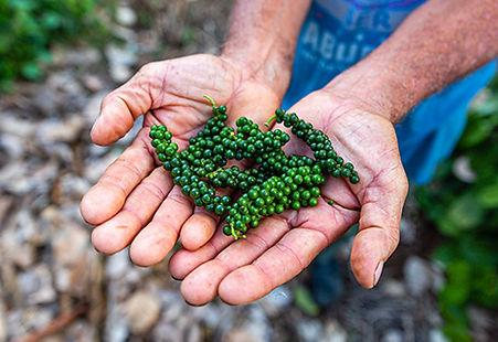 Herbs&Spices1.jpg