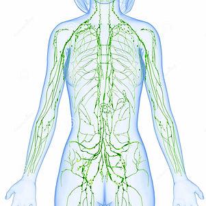 female-lymphatic-system-x-ray-anatomy-il