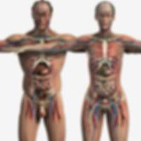 male-human-body-human-anatomy-male-and-f