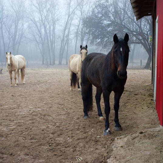 Horse Boarding Oklahoma City