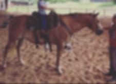 horse lease oklahoma