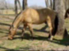 horse lease okahoma