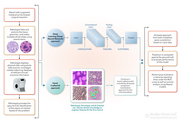 Workflow for AI in Digital Pathology
