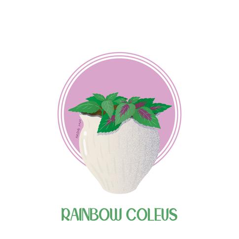 Rainbow Coleus
