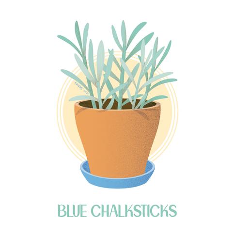 Blue Chalksticks