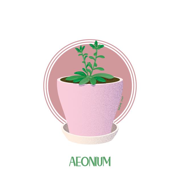 Aeonium
