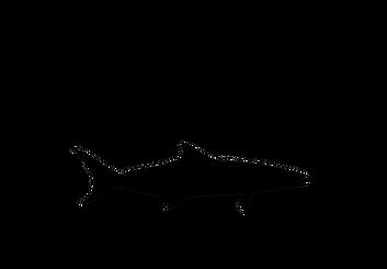 Offshore Naples LLC Logo