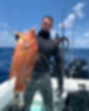 Naples Florida Big Hogfish
