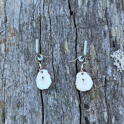 Antler Slice Earrings Small