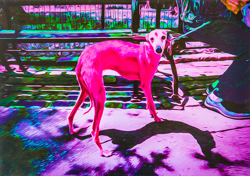 tenmei kanoh ピンクの犬
