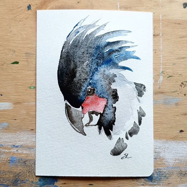 Palm cockatoo study. .