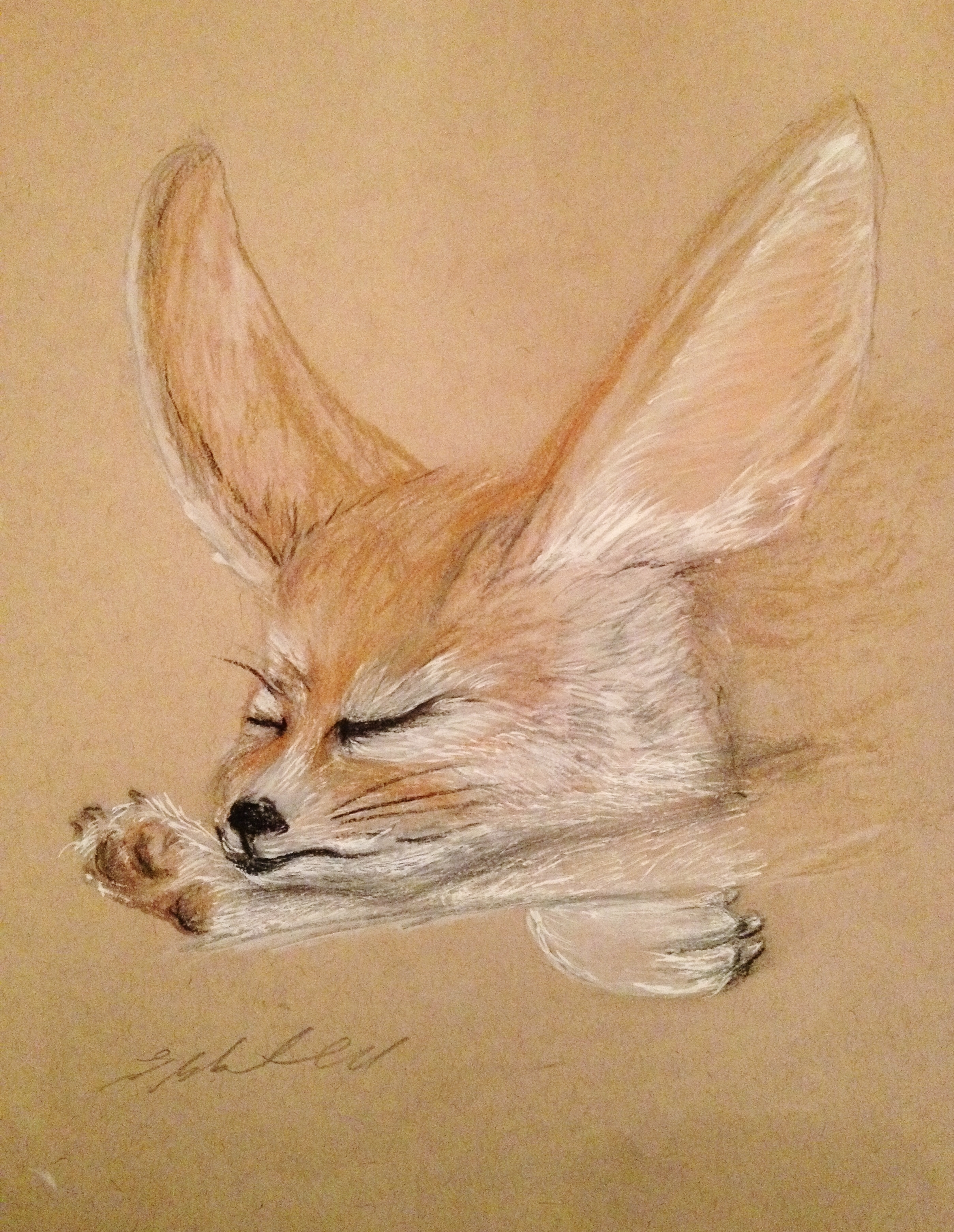 Fennec fox stretch