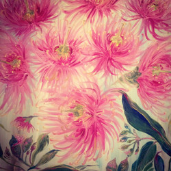 Eucalytpus Blossoms