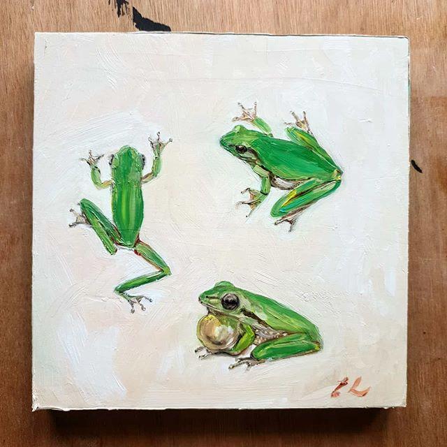 Eastern dwarf frog (eastern sedge frog)