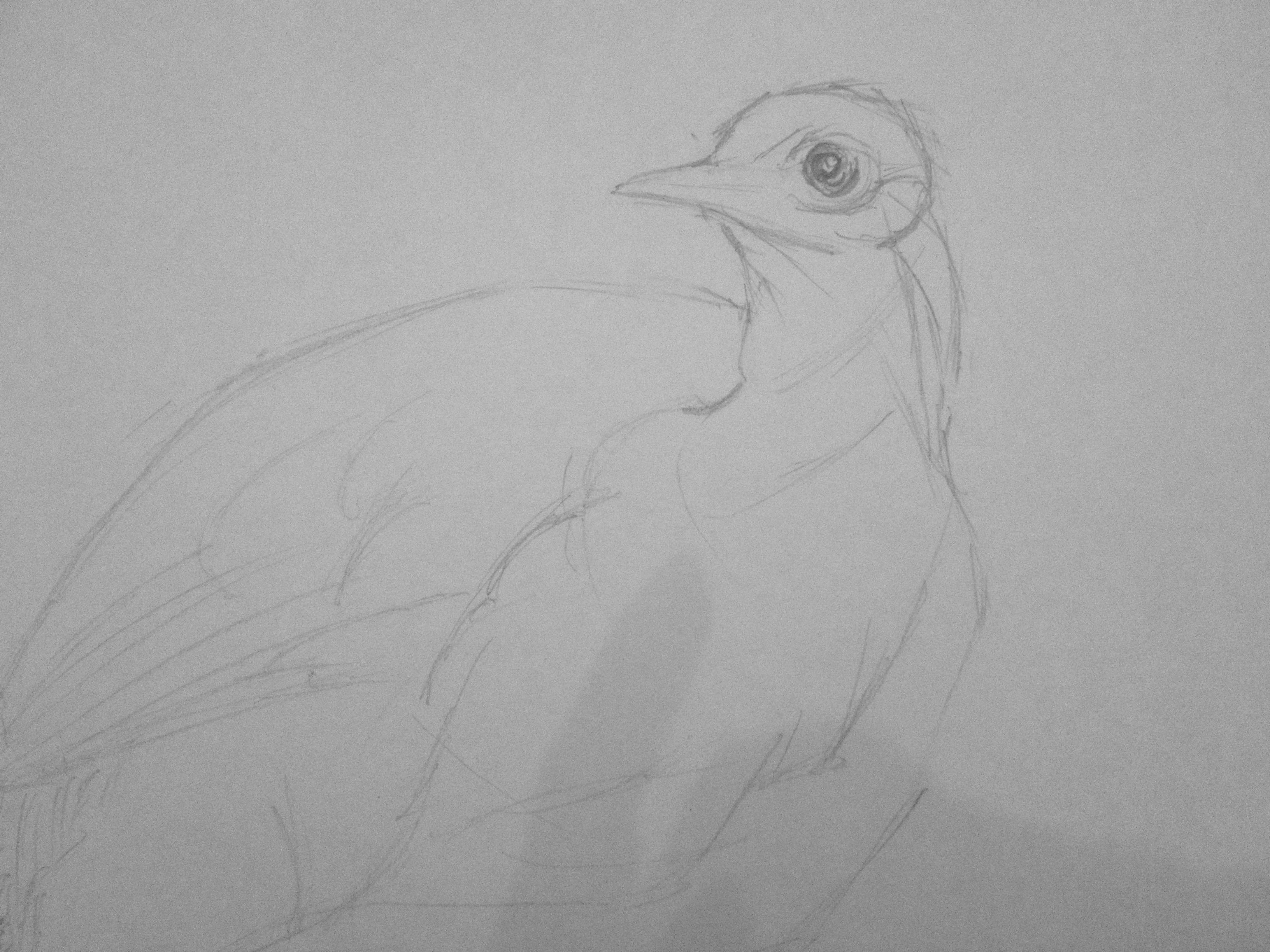 Lyrebird - Stage 1