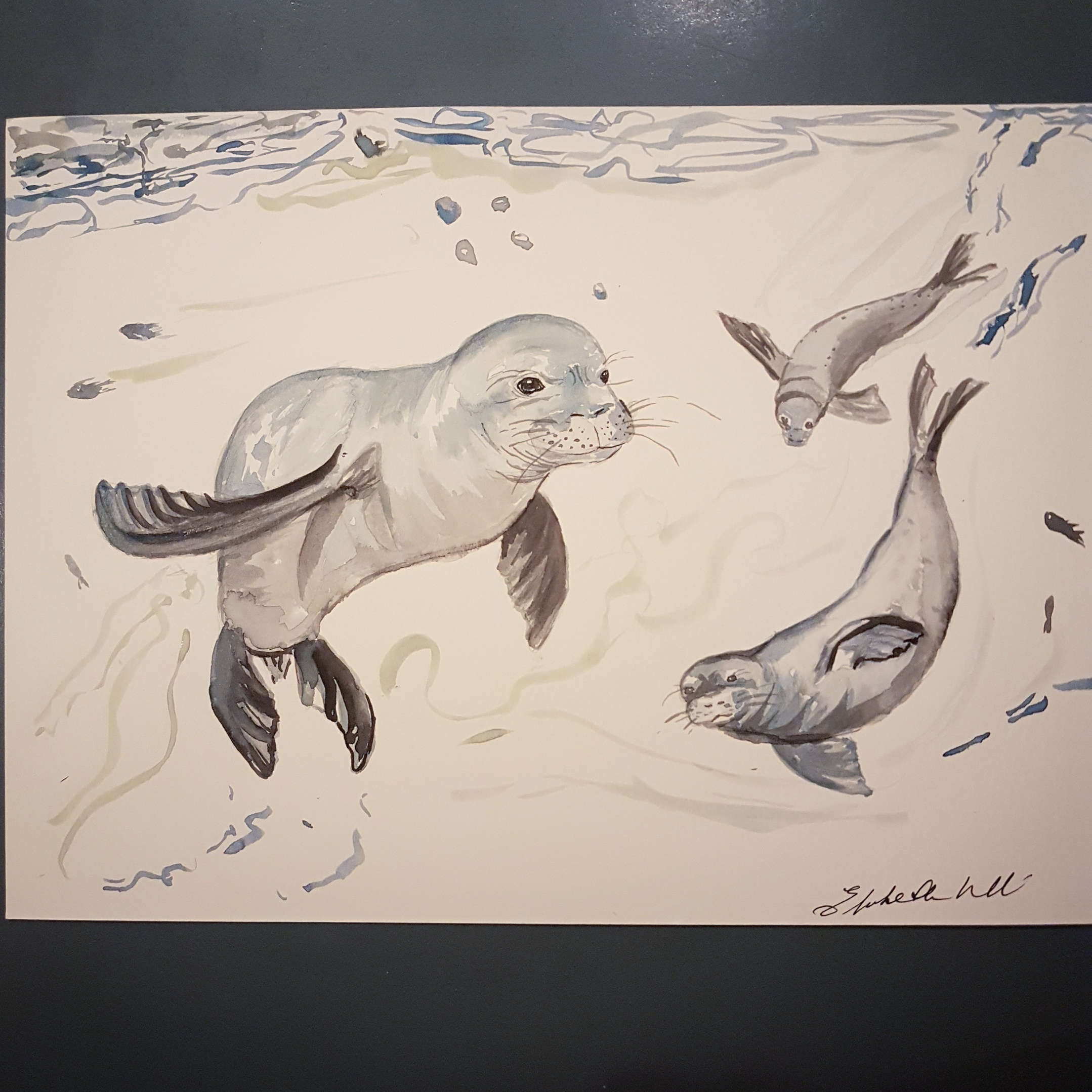 Inquisitive seals