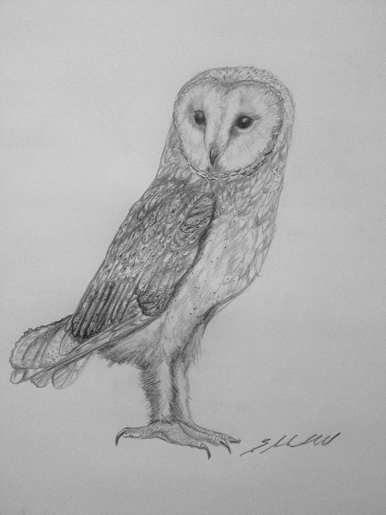 Barn Owl by Liz H Lovell