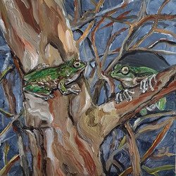 Tasmanian tree frog(Litoria burrowsi) o