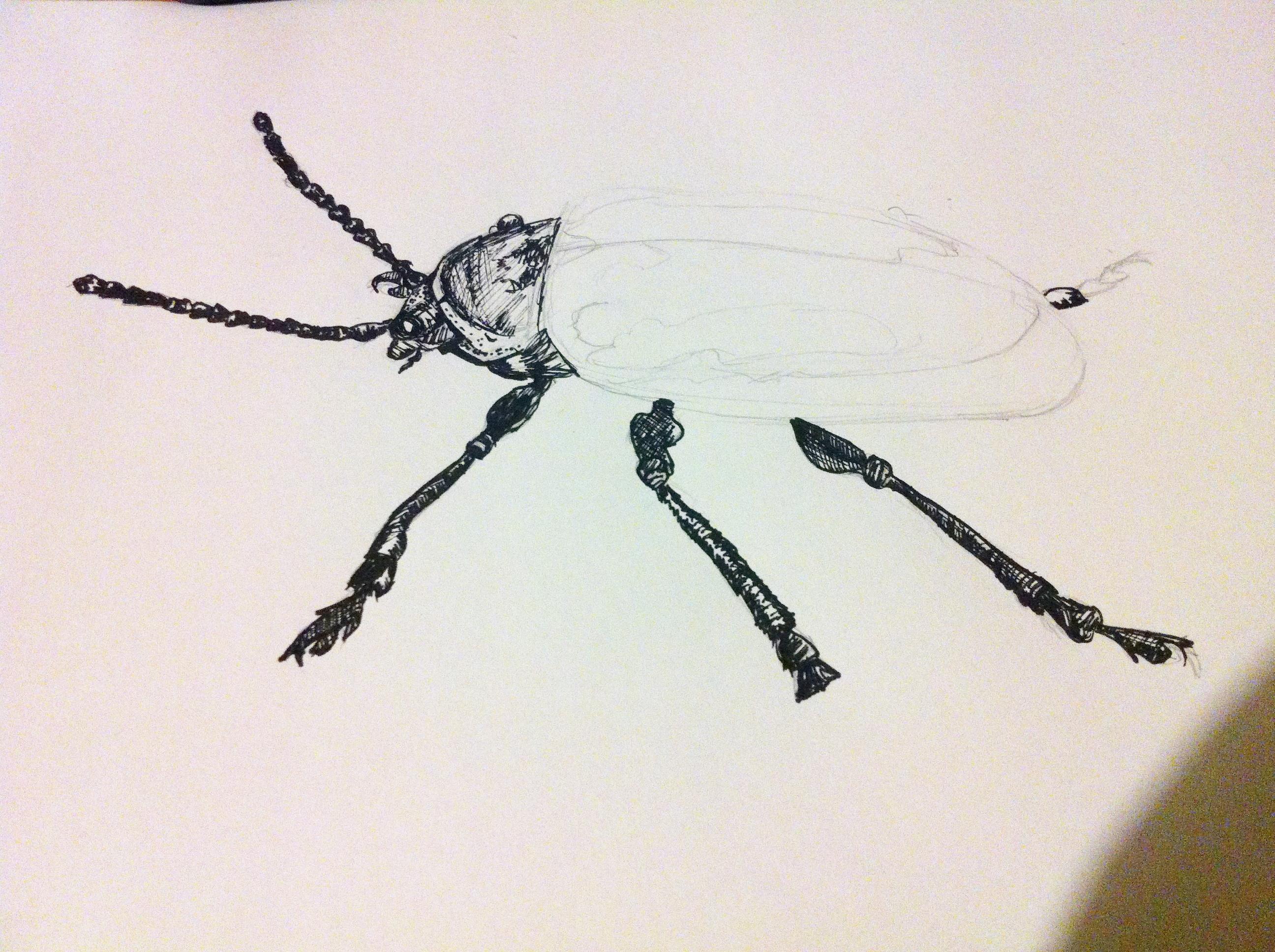 Dogbane Beetle -Outline
