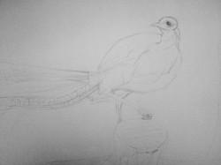 Lyrebird - Stage 2
