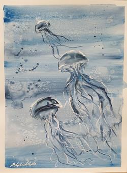 Ocean water jellyfish