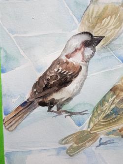 house sparrow (crop)