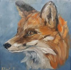 1 Liz H Lovell Vulpes Vulpes Red Fox 20x