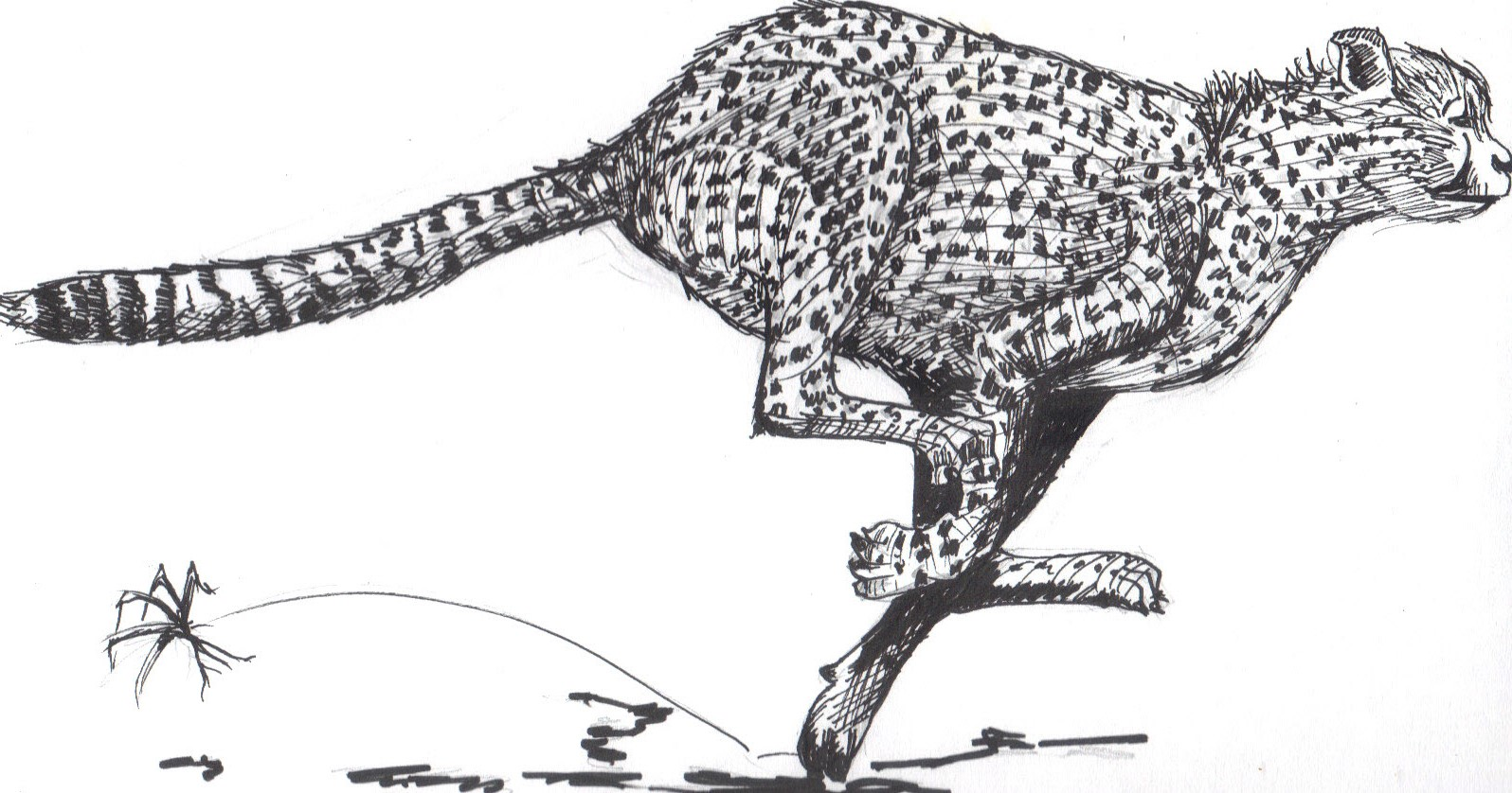 Cheetah - Ink