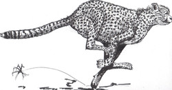 Cheetah - Ink