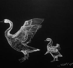 Swan and Cyget