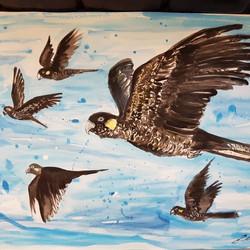Sold - Black cockatoos