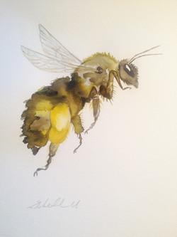 Honey Bee by Liz H Lovell