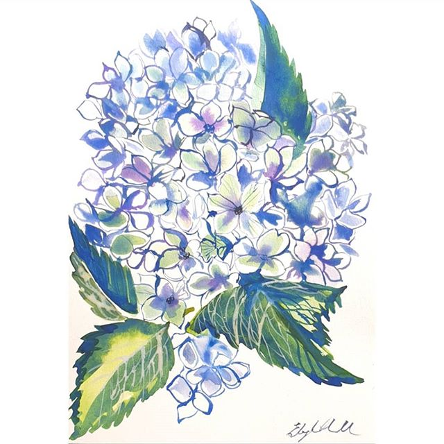Hydrangeas  Watercolour on A4 paper 300g